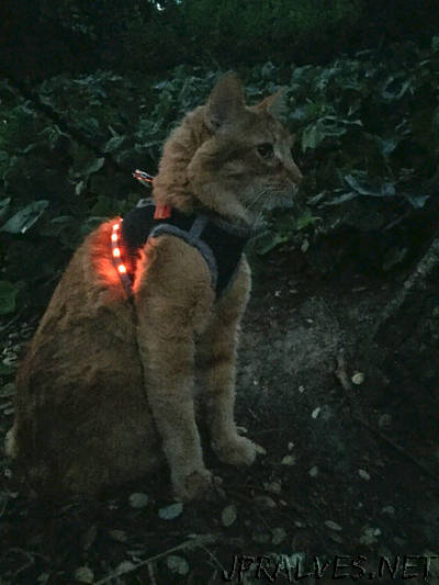 Make an LED Cat Harness