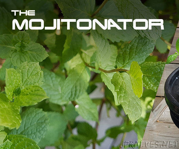 Mojitonator - Easy, Cheap, Small Hydroponic System