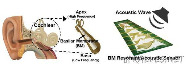 Flexible Piezoelectric Acoustic Sensors for Speaker Recognition