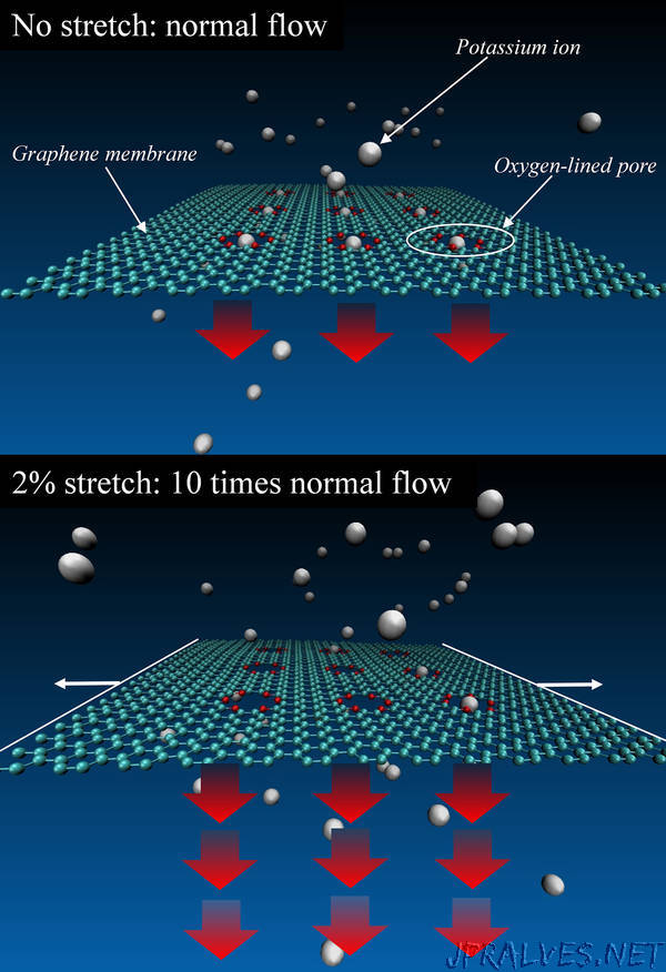 NIST Simulations Suggest Graphene Can Stretch to Be a Tunable Ion Filter