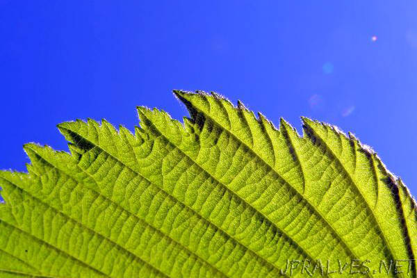 More efficient solar cells imitate photosynthesis